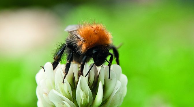 BUMBLEBEE CONSERVATION TRUST WORKING WITH LANDOWNERS