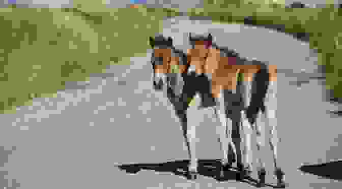 THESE PONIES NEED YOUR HELP: EXMOOR PONY CENTRE MUST RAISE FUNDS TO STAY OPEN