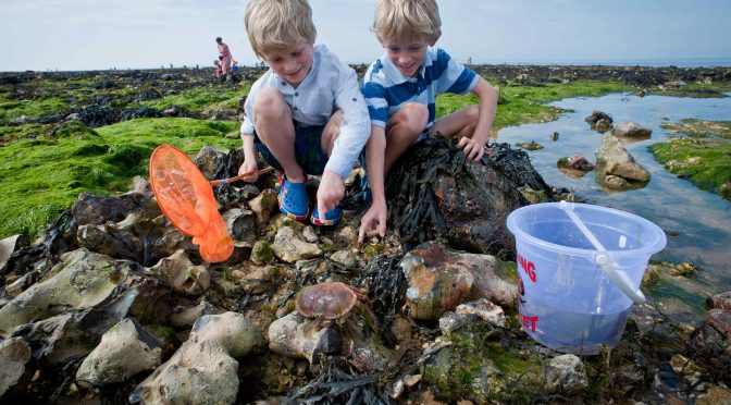 GO MAD FOR MARINE LIFE DURING NATIONAL MARINE WEEK WITH SOMERSET WILDLIFE TRUST