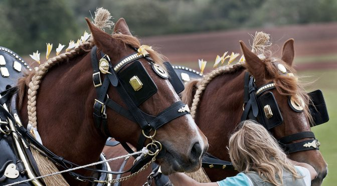 SOMERSET TO HOST BRITISH PLOUGHING CHAMPIONSHIPS